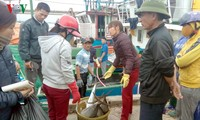 ชาวประมงจ.บิ่งดิ๋งประสบความสำเร็จในการออกทะเลจับปลาครั้งแรกในต้นปีใหม่ประเพณี