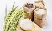 FAO dự báo Việt Nam thuộc tốp 5 nước có sản lượng gạo lớn nhất năm 2017