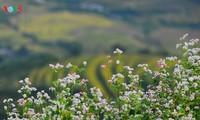 เที่ยวจังหวัดห่ายางยามฤดูดอกตามยากแหมกหรือดอกบักวีต