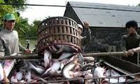 เวียดนามคัดค้านรัฐบาลสหรัฐที่บังคับใช้อัตราภาษีต่อต้านการขายทุ่มตลาดต่อผลิตภัณฑ์ปลาสวายของเวียดนาม