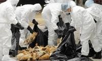 USAID อุปถัมภ์โครงการลดความเสี่ยงจากโรคไข้หวัดนกต่อสุขภาพในเวียดนาม