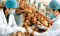 ยับยั้งโรคไข้หวัดนกH7N9 ที่อาจลามเข้าสู่เวียดนามอย่างเร่งด่วน