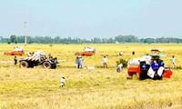 Phát triển mô hình cánh đồng mẫu lớn trong xây dựng Nông thôn mới