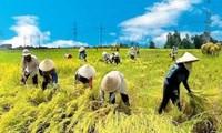Tạo cơ chế chính sách để Viện lúa Đồng bằng sông Cửu Long xứng tầm trong khu vực