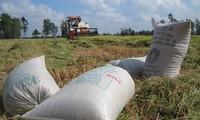Bảo đảm an ninh lương thực gắn với hiệu quả sản xuất nông nghiệp