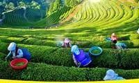 Sôi động Lễ hội trà Đại Từ, Thái Nguyên