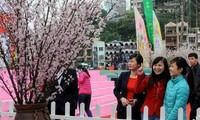 Lễ hội Hoa Anh đào Nhật Bản 2014 tại Hạ Long