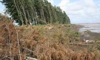 Khởi động Dự án thích ứng biến đổi khí hậu vùng đồng bằng sông Cửu Long