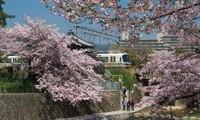 Lễ thành lập Hội Hữu nghị Nhật Bản-Việt Nam thành phố Nishinomiya