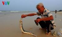 Nước biển miền Trung đạt quy chuẩn sau sự cố ô nhiễm môi trường