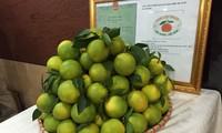 Sẵn sàng cho lễ hội trái cây đầu tiên tại miền Bắc