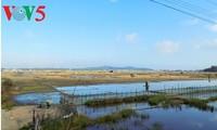 Làng muối Sa Huỳnh, Quảng Ngãi