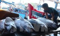 Trung Quốc và Việt Nam đẩy mạnh phát triển bền vững nghề cá ở Vịnh Bắc Bộ