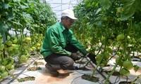 Tỉnh Lâm Đồng chi 45 tỷ đồng để xây dựng chuỗi sản xuất nông sản bền vững
