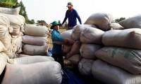 Xuất khẩu gạo dự kiến đạt 5,2 triệu tấn trong năm nay
