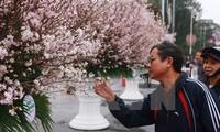 """Chủ tịch Hiệp hội Hoa anh đào Nhật Bản nhận kỷ niệm chương """"Vì hòa bình, hữu nghị giữa các dân tộc"""""""