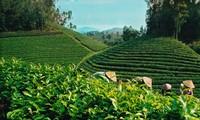 Tái cơ cấu ngành trồng trọt, chăn nuôi và thuỷ sản trong sản xuất nông nghiệp