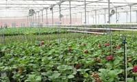 Năm 2016: nông nghiệp đảm bảo an toàn thực phẩm, đẩy mạnh thu hút doanh nghiệp đầu tư