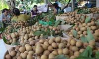 Nông dân Đồng Tháp làm giàu từ nông nghiệp sạch