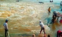 Nông dân tỉnh Đồng Tháp mưu sinh mùa nước nổi