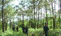 Thúc đẩy xuất khẩu các sản phẩm gỗ hợp pháp từ Việt Nam sang EU