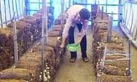 การเพาะเห็ดเพื่อเพิ่มรายได้ให้แก่เกษตรกร