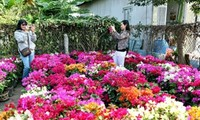 หมู่บ้านดอกไม้ซาแด๊กอวดสีสันสดสวยต้อนรับเทศกาลตรุษเต็ต