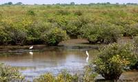Tăng cường quản lý các khu dự trữ sinh quyển đồng bằng sông Hồng góp phần thích ứng biến đổi khí hậu