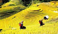 Yên Bái: Sẵn sàng cho Tuần Văn hoá -  Du lịch Ruộng bậc thang Mù Cang Chải 2017