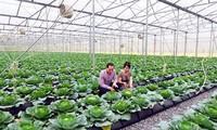Việt Nam quan tâm phát triển thị trường nông nghiệp hữu cơ