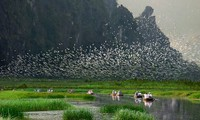 Vietnam protects biodiversity for sustainable development