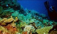 Oceans are under threat