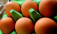 Fipronil contaminated eggs scandal