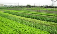 Using smart phone in cultivating vegetables