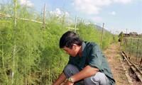 កសាងរូបសណ្ឋានផលិតកម្មវាលស្រែទ្រង់ទ្រាយធំនៅខេត្ត Ninh Thuan