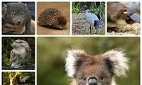 US provides 10 million USD for Vietnam's fight against wildlife trade