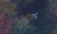 UK mid-air collision kills Vietnamese pilot