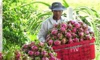 เวียดนาม-เนเธอร์แลนด์ลงนามข้อตกลงความร่วมมือด้านผัก ดอกไม้และผลไม้