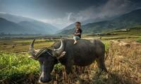 ภาพถ่ายเกี่ยวกับความสวยงามของเวียดนามในการประกวดภาพถ่ายนานาชาติ(ตอนที่๒)