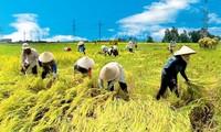 เวียดนามจะกลายเป็นประเทศที่ผลิตสินค้าการเกษตรหลักในเอเชียตะวันออกเฉียงใต้