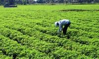 การปรับเปลี่ยนโครงสร้างพันธุ์พืชสร้างประสิทธิภาพในการสร้างสรรค์ชนบทใหม่ในตำบลเตินเหงีย