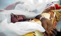 สามารถควบคุมโรคไข้เหลืองในประเทศแองโกลาและสาธารณรัฐประชาธิปไตยคองโก
