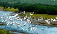 อุทยานแห่งชาติซวนถวี- แหล่งที่อยู่อาศัยของนกชนิดต่างๆ