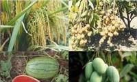 เวียดนามและอิสราเอลส่งเสริมความร่วมมือด้านการเกษตร
