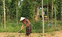 สตรีชนเผ่าเวินเกี่ยวพัฒนาเศรษฐกิจ