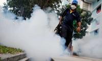 Число заразившихся вирусом Зика в Сингапуре продолжает расти