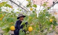 Активизация зеленого роста для противодействия изменению климата