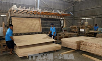 Vietnam eyes 9 billion USD in forest product exports