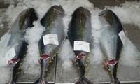Seminar on tuna industry opens in Da Nang