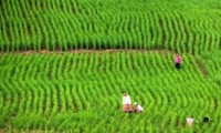 ADB supports green agriculture in Vietnam